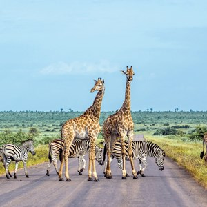 Spectacular South Africa with Victoria Falls Luxury Tour