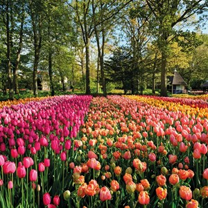 Chelsea Flower Show and Springtime Alps Guided Tour