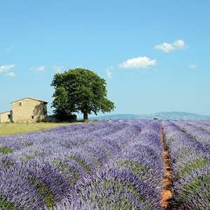 Country Roads of France Guided Tour