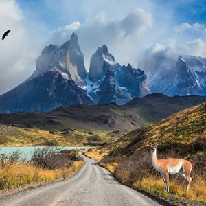 Best of Chile from Atacama to Patagonia Guided Tour